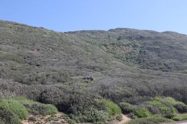 Vast fields at Pt. Loma
