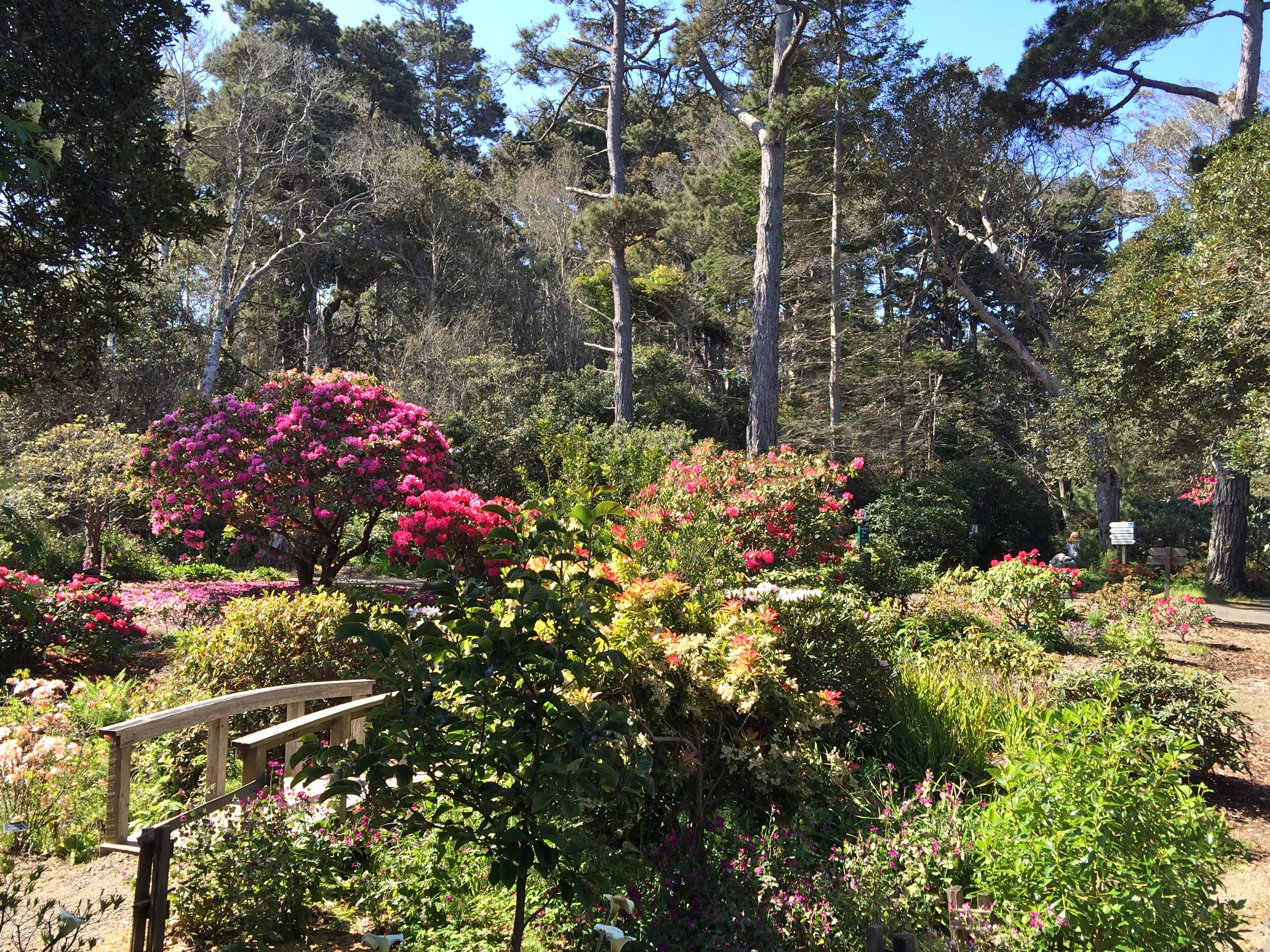 Birding mendocino california brighamstephen - Mendocino coast botanical gardens ...