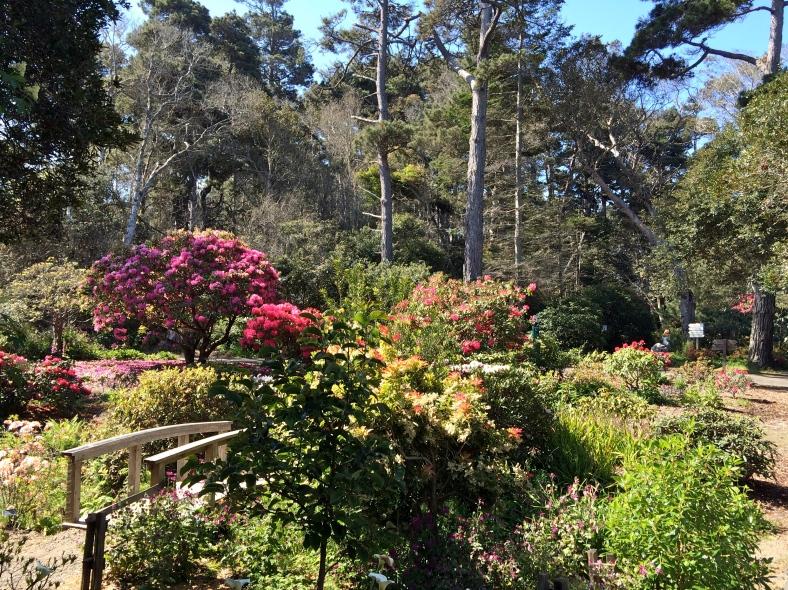 Mendocino Coastal Botanical Garden