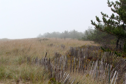 Fog rolling in at Siasconset