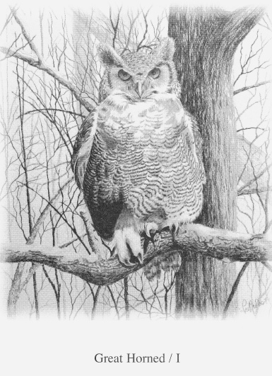Great Horned Owl, xx Probst
