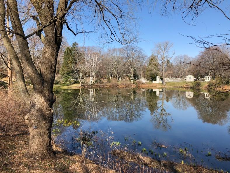 Birding Mount Auburn In Springtime